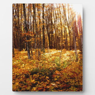 Forest Sunset in the fall Maple Bush Plaque
