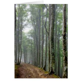 Forest track near Roncesvalles Card