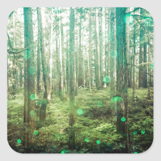 Forest Trees - In the Woods Pattern Square Sticker