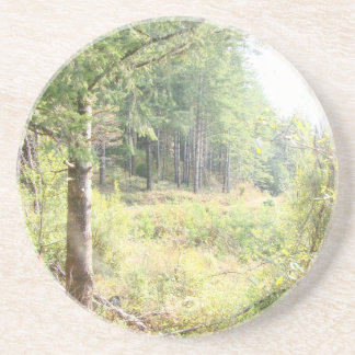 Forest Trees Redwoods Hiking Trail Scenic Oregon Drink Coaster