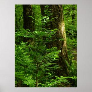 Forest Walk spring 1 Poster