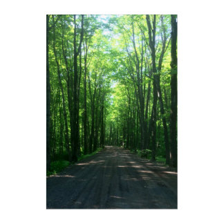 forest wall panel acrylic wall art
