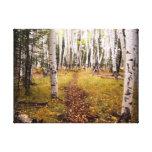 Forêt d'Aspen en automne Impression Sur Toile