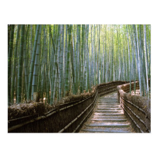 Forêt en bambou à Kyoto Carte Postale