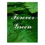 Forever Green Post Cards