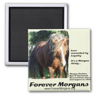ForeverMorgans Morgan Stallion Magnet