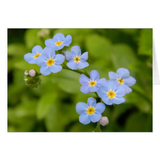 Forget-Me-Not 1 Card
