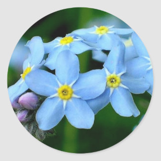 forget -me -not classic round sticker