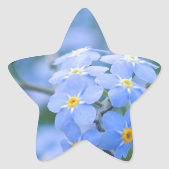 forget-me-not-flowers no. 2 photographed by Tutti Star Sticker