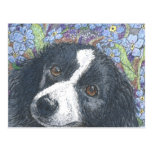 'Forget me not', the Border Collie said. Postcard
