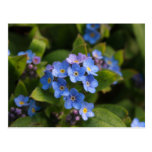 forget-me-not with dew macro postcard