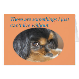 Forgive Me Card With Cavalier King charles Spaniel