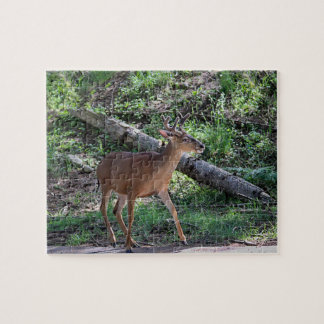 Forked Horn Buck Puzzle