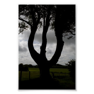 Forked tree poster