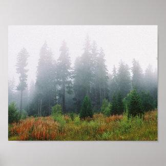 Forrest Fog Pine Trees Value Poster Paper