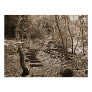 Forrest Steps XL Canvas Poster