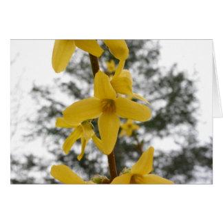 Forsythia blossom notecard