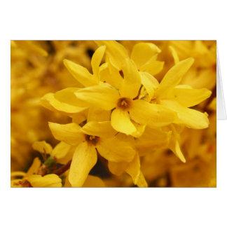 Forsythia Flower Greeting Card