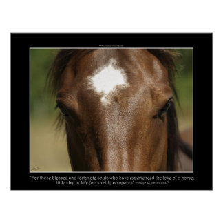 FORTUNATE ~ Chestnut Horse Photo Poster
