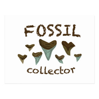 Fossil Collector Postcard