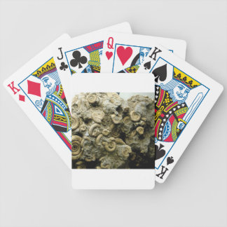 fossil shells art bicycle playing cards