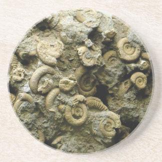 fossil shells art coaster