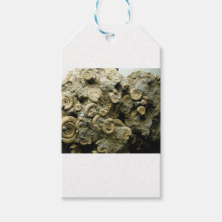 fossil shells art gift tags