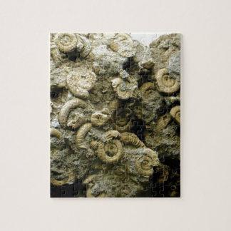 fossil shells art jigsaw puzzle