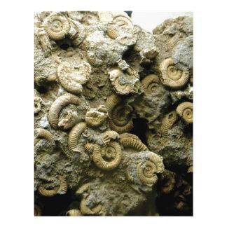 fossil shells art letterhead