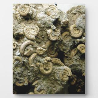 fossil shells art plaque