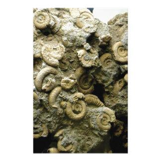 fossil shells art stationery