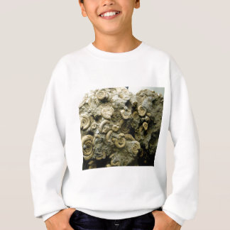 fossil shells art sweatshirt