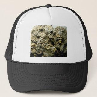 fossil shells art trucker hat