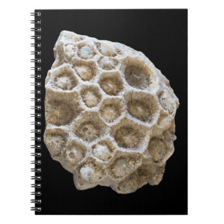 Fossilized Coral Closeup Photo Spiral Notebook