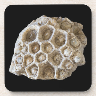 Fossilized Coral Photo on Black Coasters