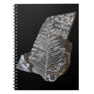 Fossilized Fern Leaves Photo on Black Background Notebooks
