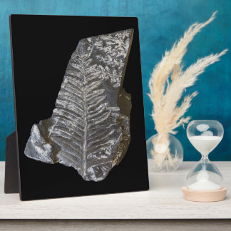 Fossilized Fern Leaves Photo on Black Plaque