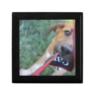 Foster Dog Tug of War Keepsake Boxes