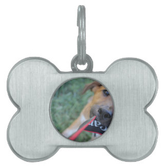 Foster Dog Tug of War Pet ID Tag