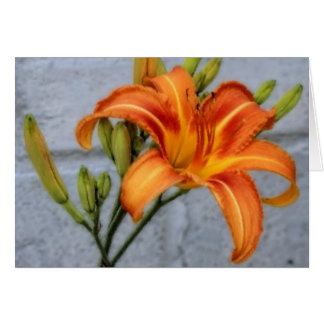 Foundation Lily Card