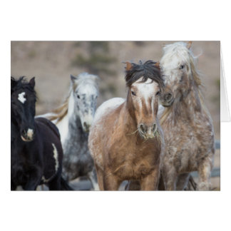 Four Adobes - Galloping to Freedom Greeting Card