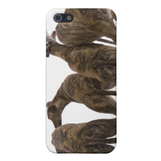 Four brindle greyhounds iPhone case