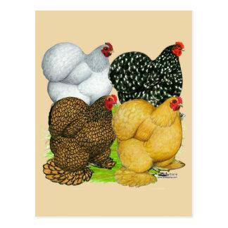 Four Cochin Hens Postcard