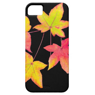 Four colored autumn leaves on black background iPhone 5 covers