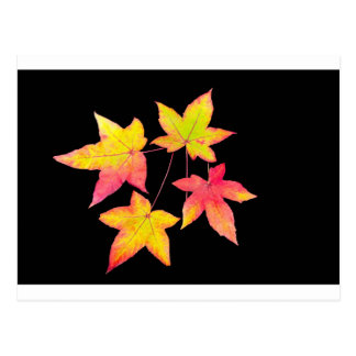 Four colored autumn leaves on black background postcard