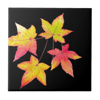 Four colored autumn leaves on black background tile