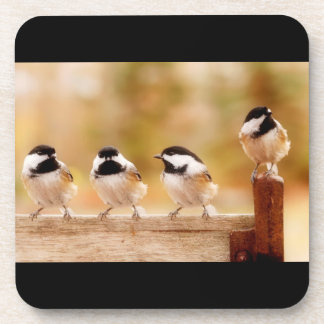 Four Cute Chickadees Coaster
