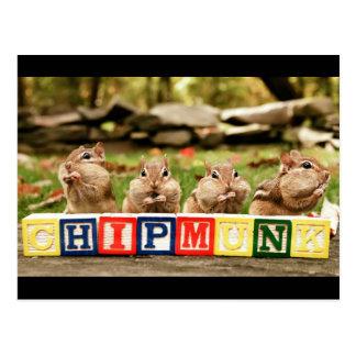 four cute chipmunks postcard