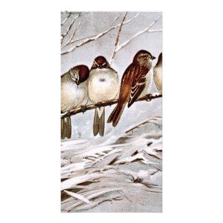Four Cute Tree Sparrows Customized Photo Card