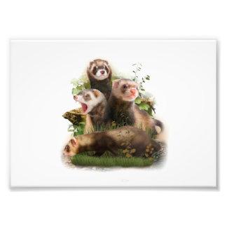 Four Ferrets in Their Wild Habitat Photo Print